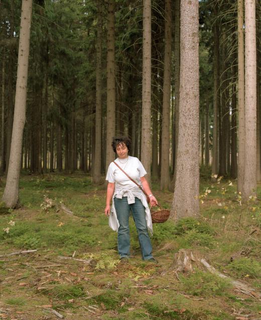 """Ronny Ristok, """"In die Pilze II"""", aus """"Sammler sammeln"""", 2013"""