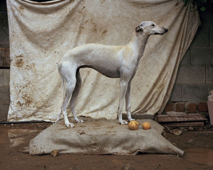 Martin Usborne, aus Spanish hunting dogs