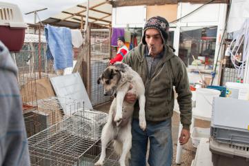 Manuela Dörr, Tierheim Asociatia Anima und VereinFreundeskreis der Strassenhunde in Campulung e.V.in Câmpulung, Rumänien
