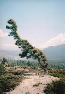 Delbrouck, Windy Trees